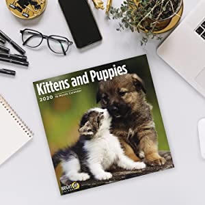 2020 Kittens and Puppies