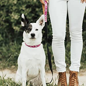 friendshipcollar matching leashes for dogs