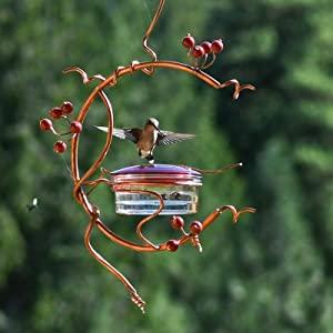 hummingbird feeders red berries