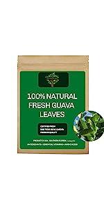 Fresh Guava Leaves, Fresh Guava Tea
