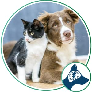 Seizures and Epilepsy Relief for Pets