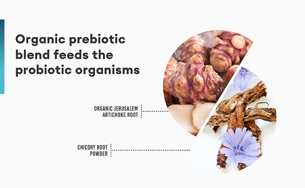 prebiotics feed probiotics jerusalem artichoke root chicory root powder prebiotic