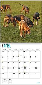 bloodhounds calendar