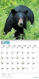 2020 bear calendar