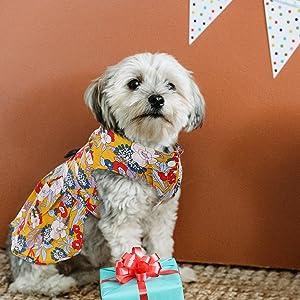 floral dog dress
