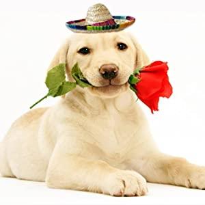 mini sombrero hat for dog