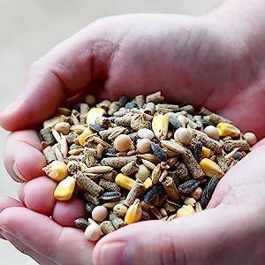 yardblend whole grain scratch corn poultry chicken supplement treat