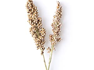 Ancient Grains, Sustainable foods, healthy, Made in the USA