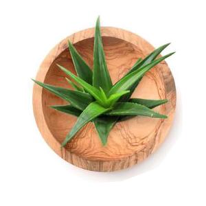 Aloe vera shampoo for hair growth orange blossom shampoo and conditioner vanilla shampoo