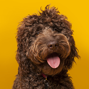 Dog on yellow background paper