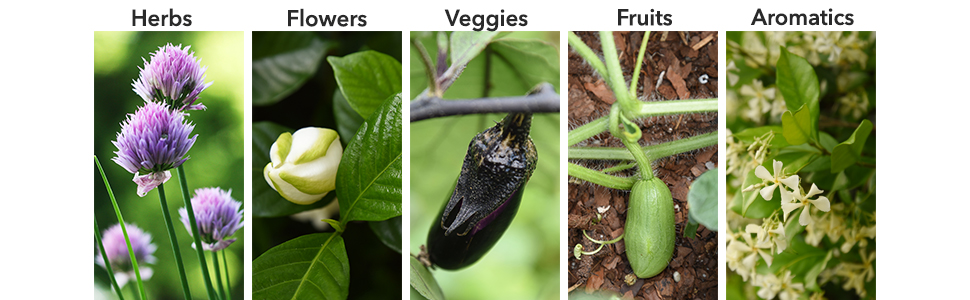 Use Perfect Plants Plant Food by Perfect Plants to enhance nutrient enrichment in garden soil