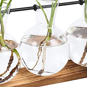 air plant glass globe air plant glass hanging globe jellyfish air plant glass metal glass air plant