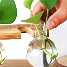 terrarium wooden stuff propagation live succulent aesthetic garden gifts retro bulbs bulb metal set