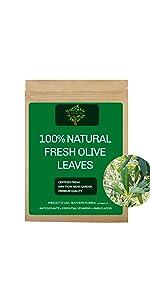 Fresh Olive Leaves, Fresh Olive Tea