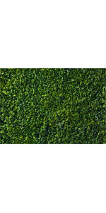 Nature Theme Green Leaves Backdrops Photography 7x5ft Party Lawn Grass