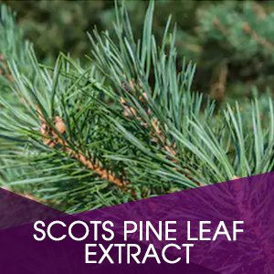 Scots Pine Leaf Extract