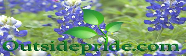 texas bluebonnet flower seed outsidepride