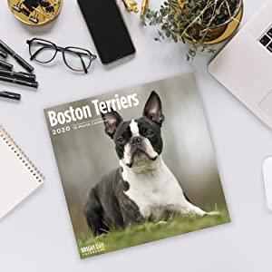 dog wall calendar