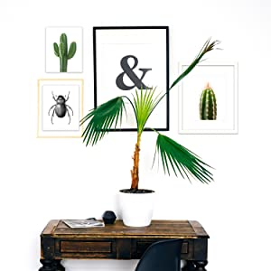 Stretched Canvas Wall Art Home Decor Prints - Giclee Printed Picture Panel Decorations for Rooms