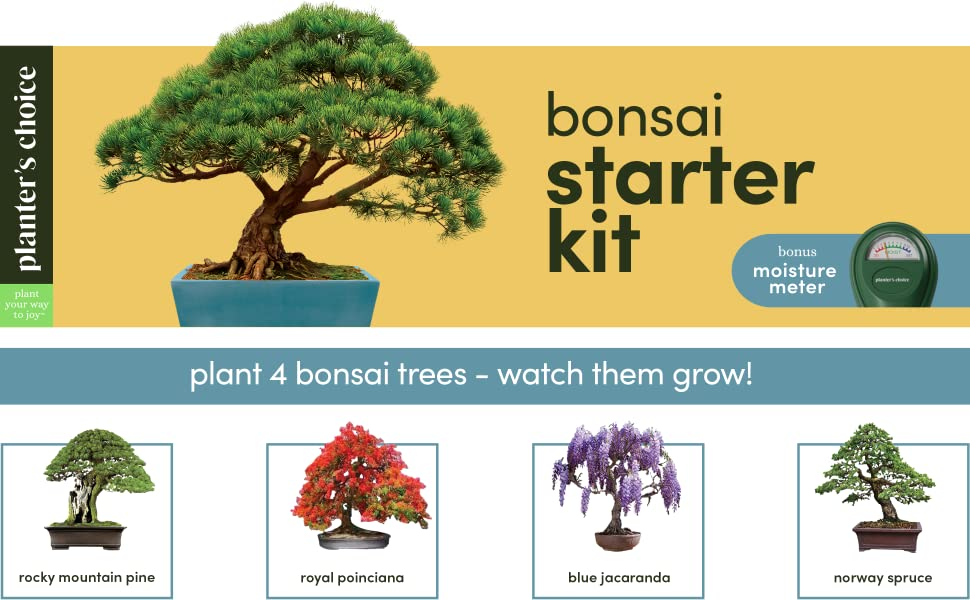 Bonsai Tree Growing Kit Grow 4 Indoor Bonsai Trees Plant A Garden From Seeds Unique Gardening Gifts For Women Men Gardeners Unusual Gift Ideas Adults Gardener Gifts Plants Starter Kits