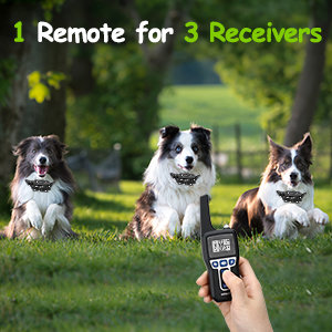 1 Remote Training 3 Dogs