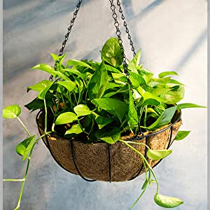 Hanging Basket Planter Metal with Coconut Coir Liner Wire Plant Holder with Outdoor Decorations for