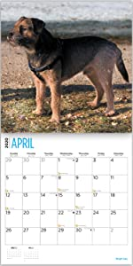 border terrier calendar