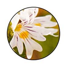 Eyebright nectar bee friendly pollen flower blossom