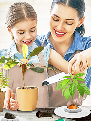GORNORVA Avocado Tree Growing Bowl Planting Seed Germinator Bowl...