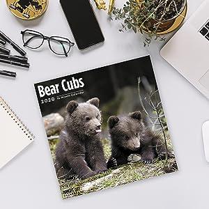 bright day wall calendars bear wall calendar bear cubs kids calendar