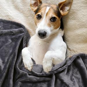 for pet blanket
