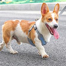 Dog harness blue