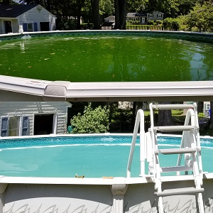 Green to Clean Pool