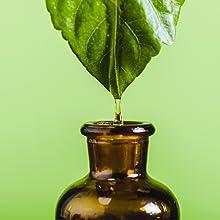 essential oils plant based leaf bottle