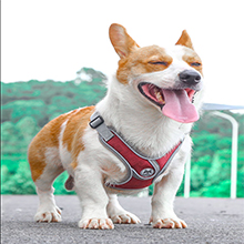 Dog harness red