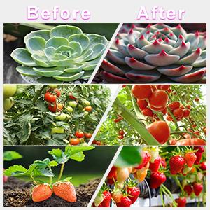 led plant grow light