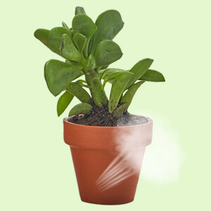 3 inch clay pot