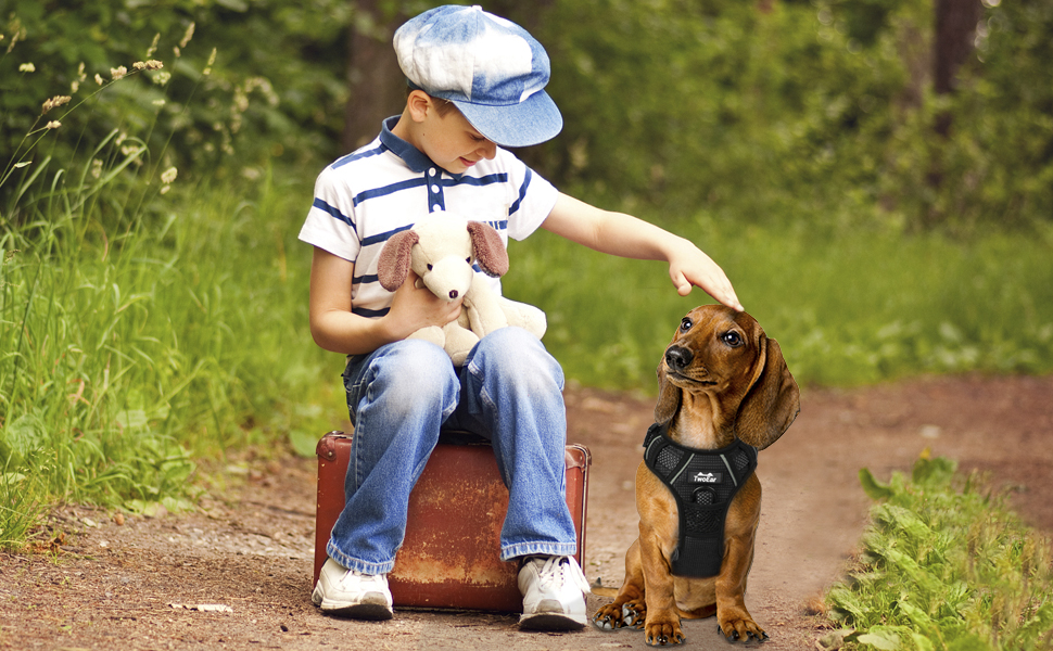 boy and dog togrther