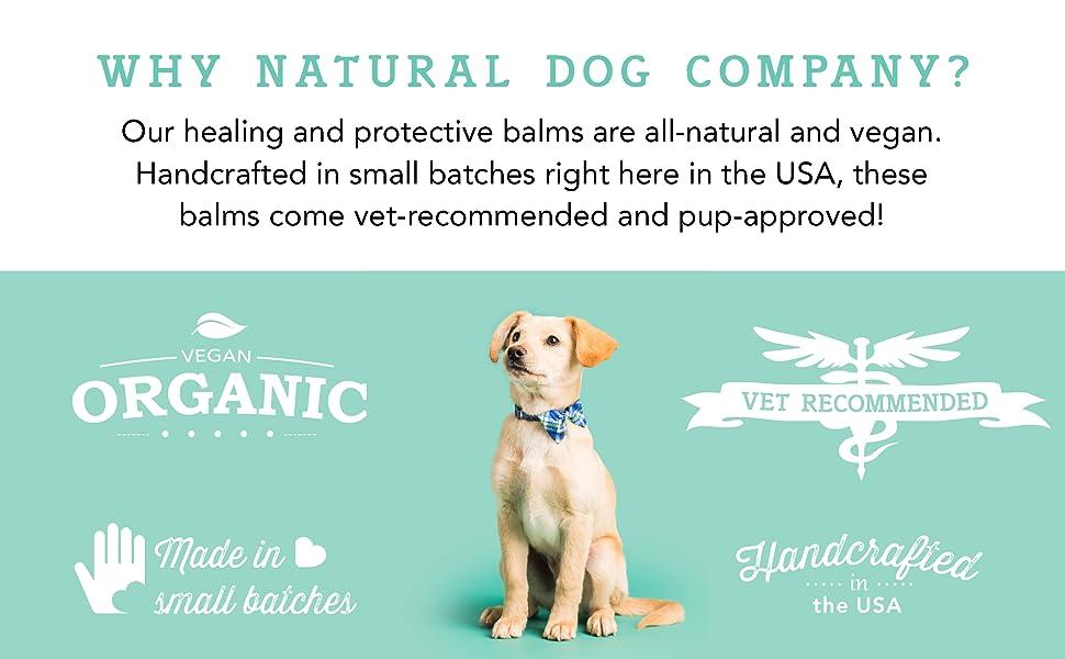 natural dog company bulldog skin fold dermatitis