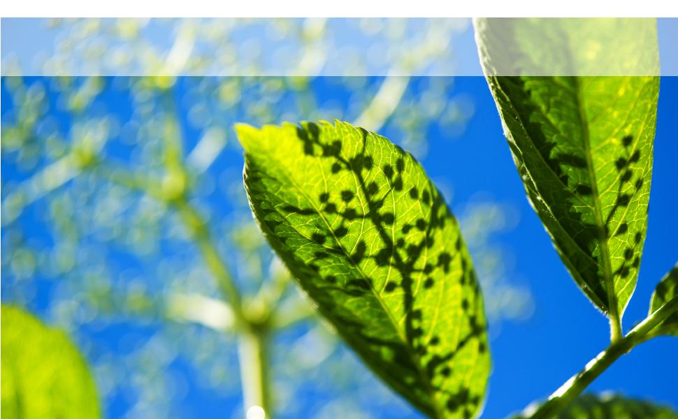 bionorica sinupret sinus support herbal natural