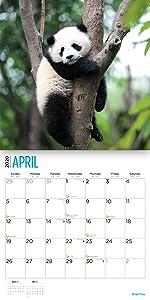 2020 panda calendar