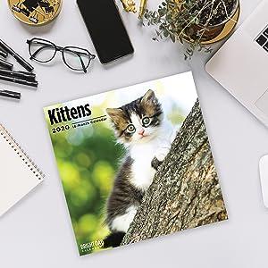2020 Kittens Calendar!