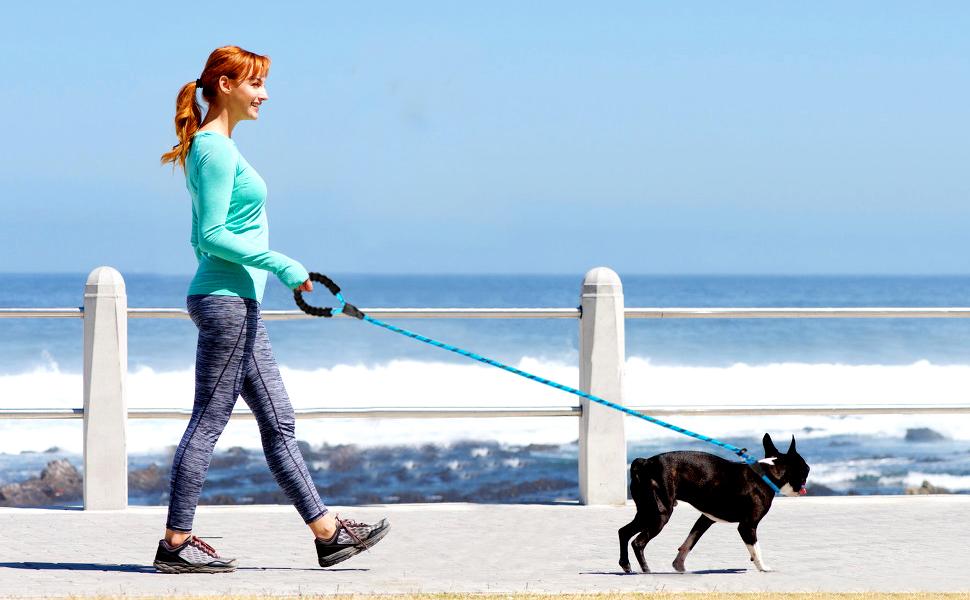 dog rope slip leash