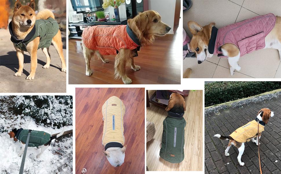 Dog Jacket for Winter