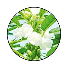 sesame vitamin a d e f asian holistic ayurveda