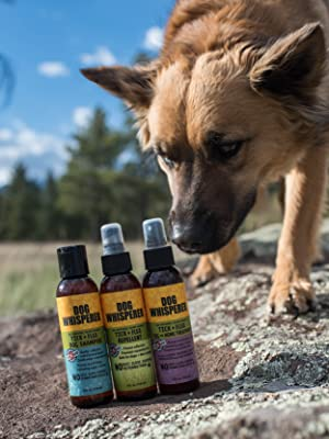dog whisperer try me pack dog on rock