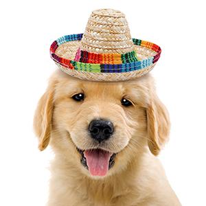 party hat supplies mini decorations