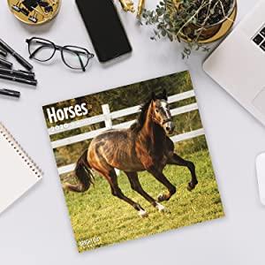 2020 Horses Calendar!
