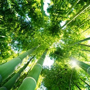 Bamboo Hardness