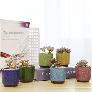mini succulent planter ice crack